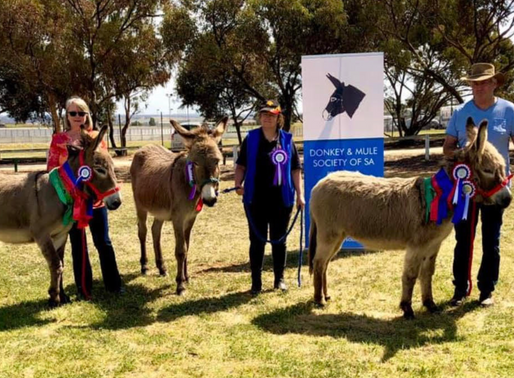 Past Shows Murray Bridge Show Sept 2019