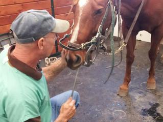 Maximizing Equine Dental Care