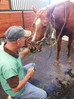 Maximizing Equine Dental Care