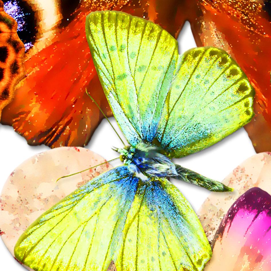 Butterfly_artwork_Peace_art_5.jpg
