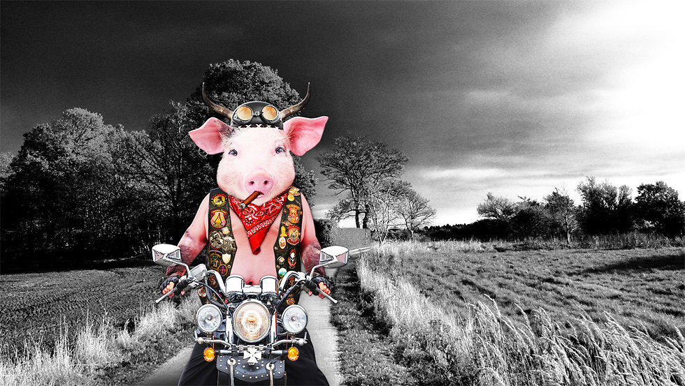 pig_artwork_Harley_art_Michala_Brincker_