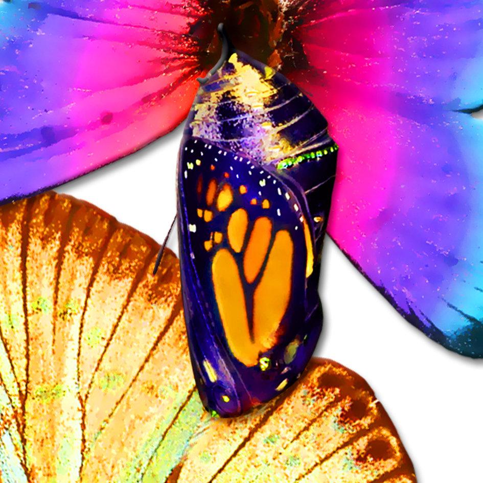 Butterfly_artwork_Peace_art_9.jpg