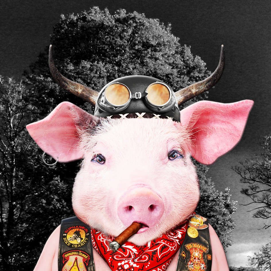 pig_artwork_Harley_art_2.jpg