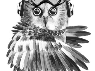 Owl picture, for charity