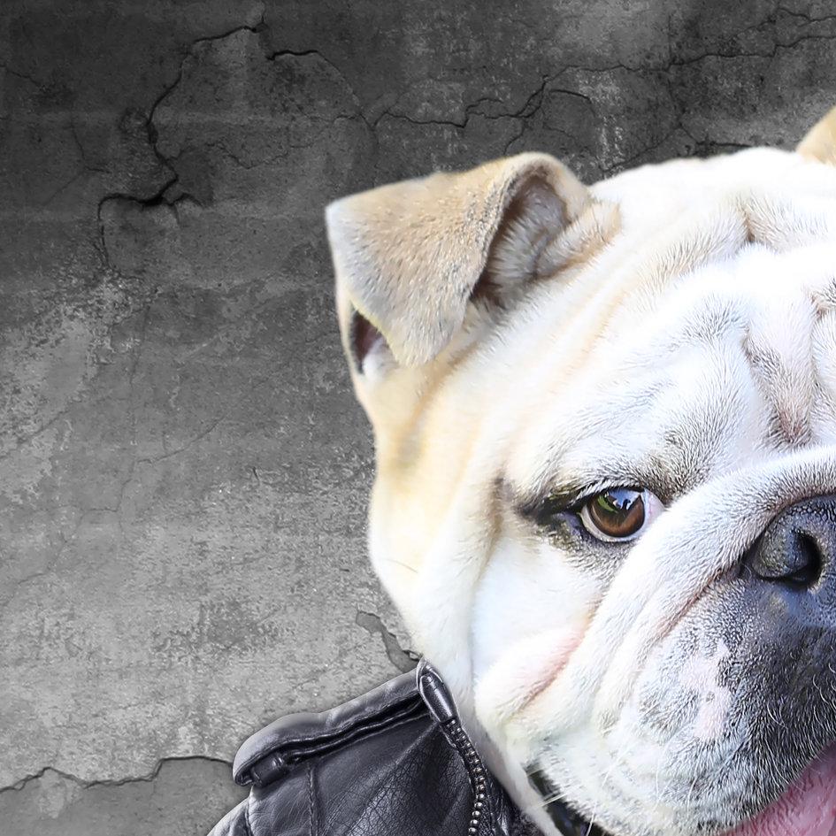 Bulldog_art_dog_artwork_4.jpg