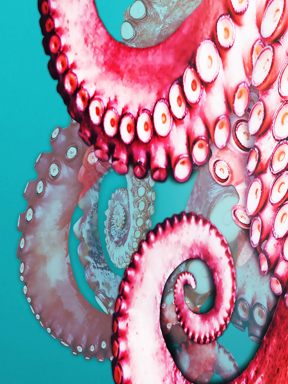 a_Octopus_artwork_3.jpg