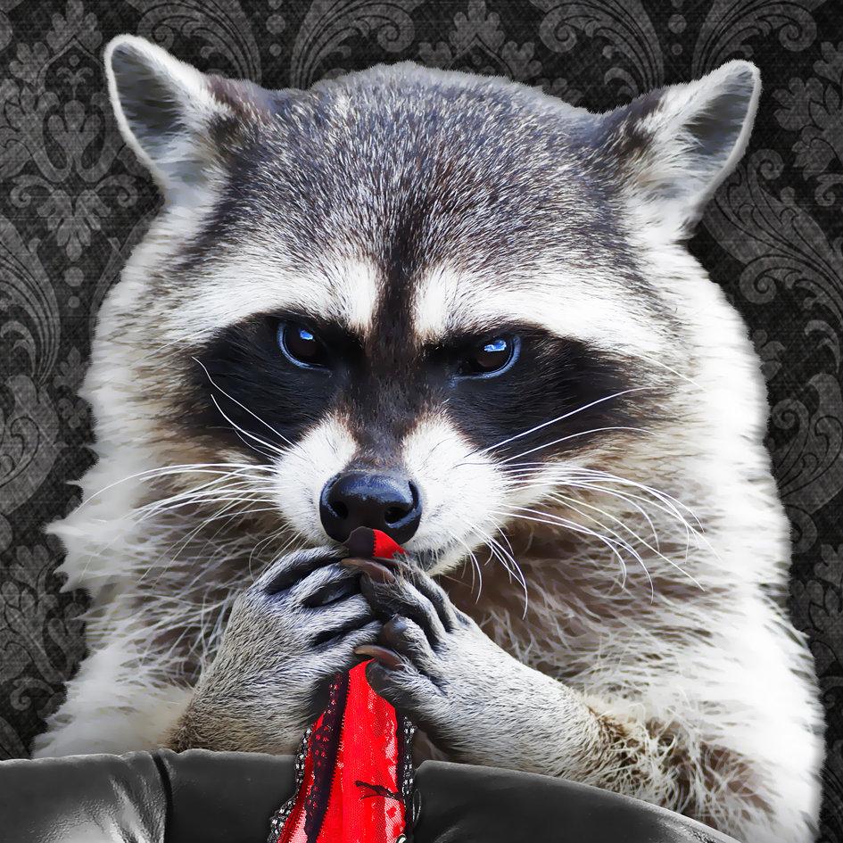Racoon_artwork_Naughty-Raccoon_art_2.jpg