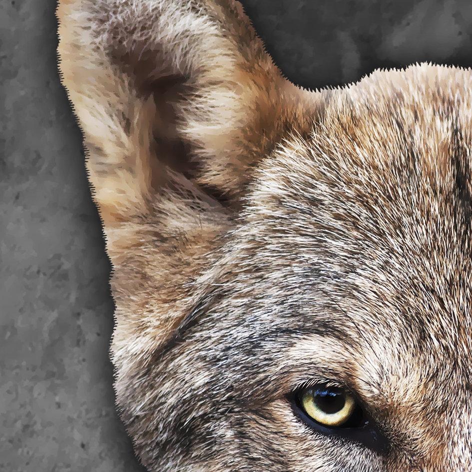 Fox_artwork_Mr_Fox_4.jpg