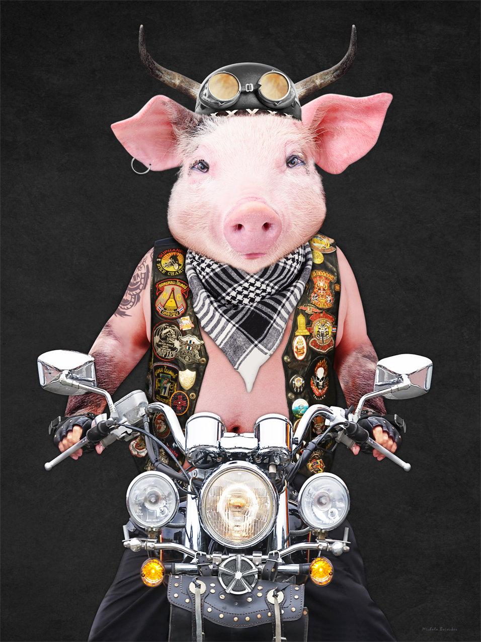 pig_on_Harley_artwork_Michala_Brincker_1