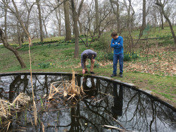 Along pond
