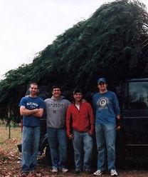 MCTF Tree on top of truci_edited.jpg