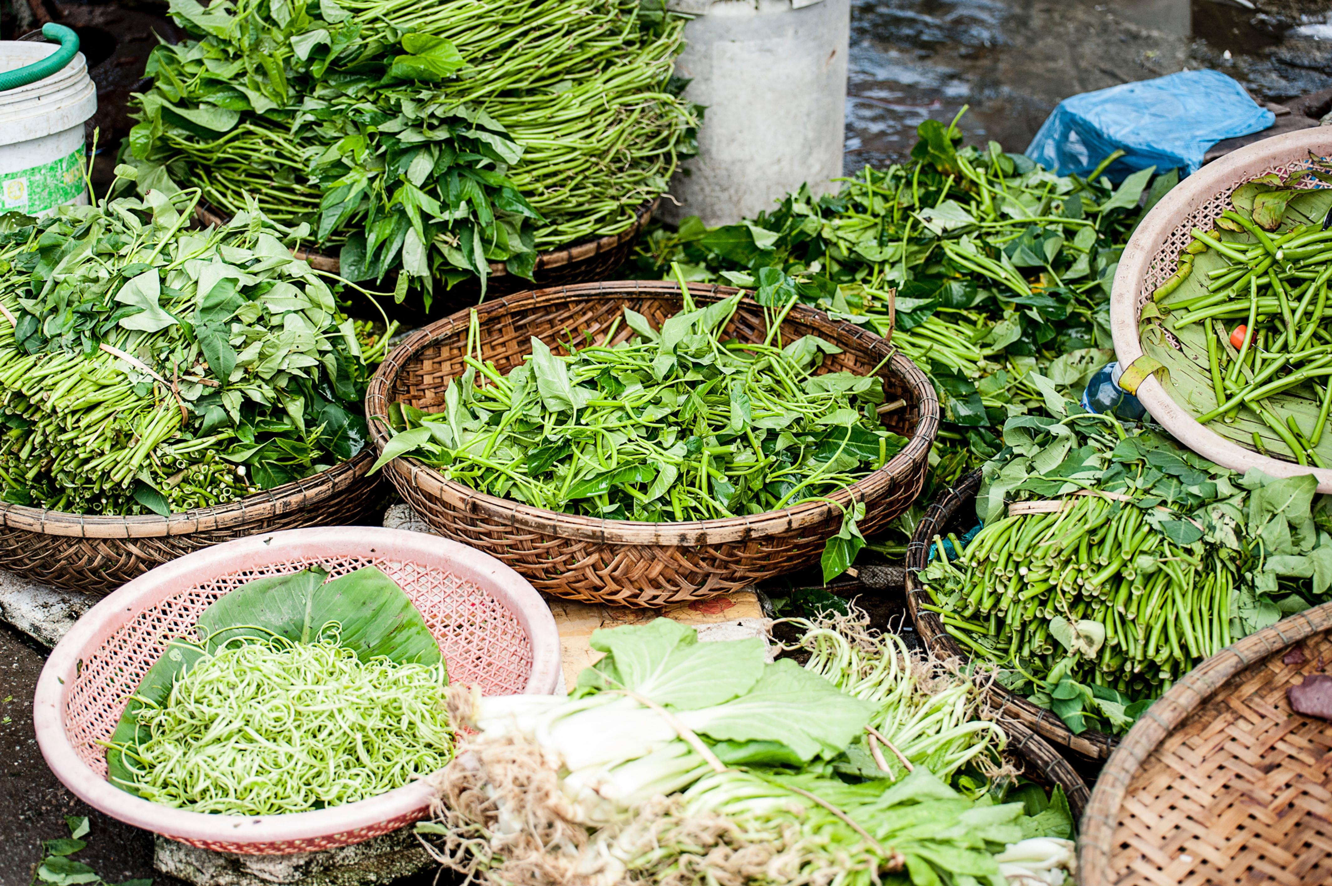 Herbalist & Nutrition Support