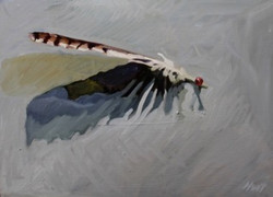 13-POS-Feather 3