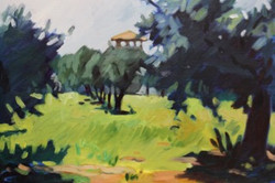 16-POL-Assisi, Olive Grove 2