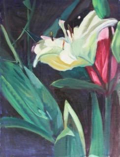 16 White Lily POS 16 x 20