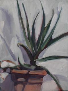 13-POS-Aloe Plant