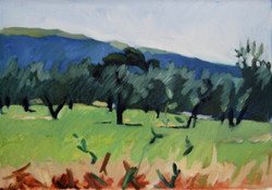 16-POL-Assisi, Olive Grove 1