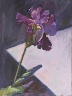 15 Iris POL 16 x 20