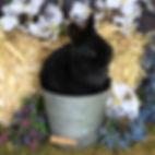 Edgar 1.jpg