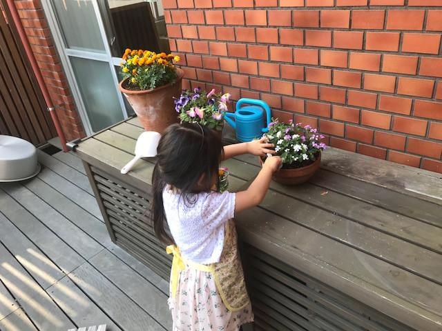 花の水替え テラス 花摘み