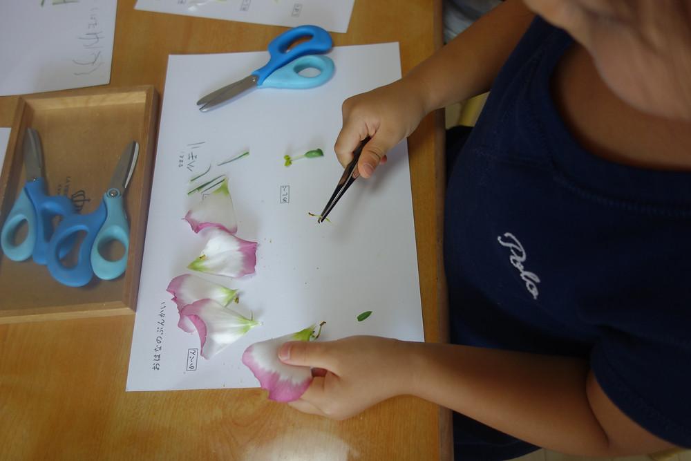 プライマリークラス お花の分解