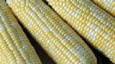 Corn- American Dream