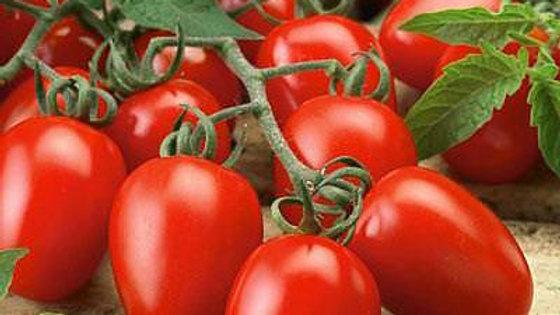 Tomato- Roma