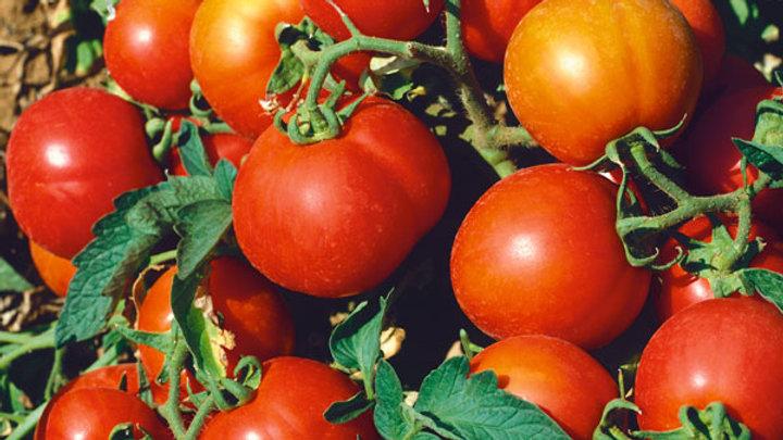 Tomato- Sub Arctic Plenty