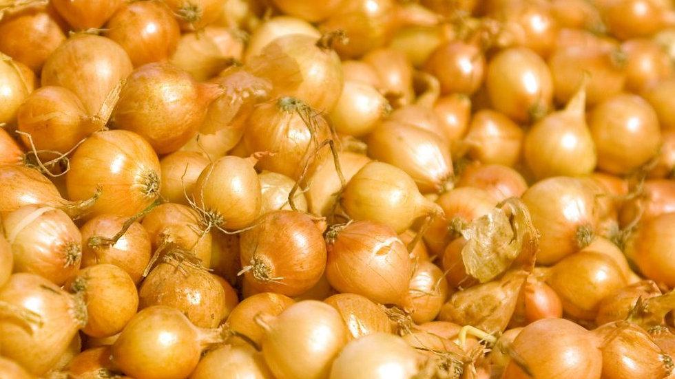 Onion Sets- Yellow Dutch