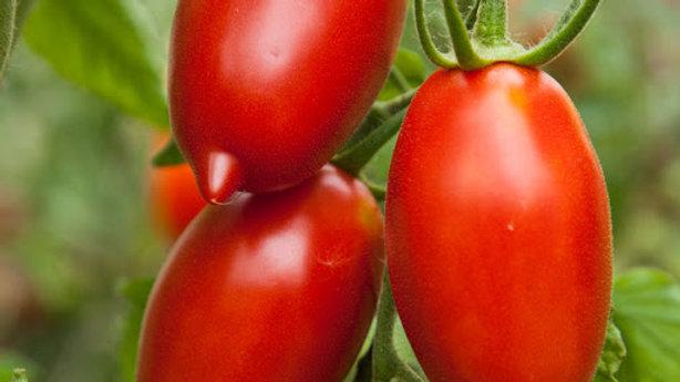 Tomato- Amish Paste