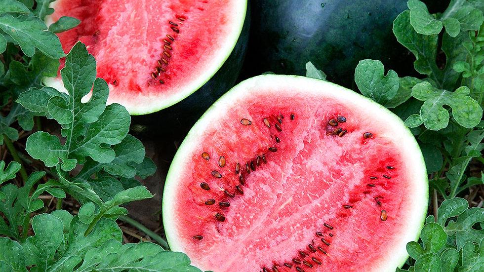 Watermelon- Sugar Baby