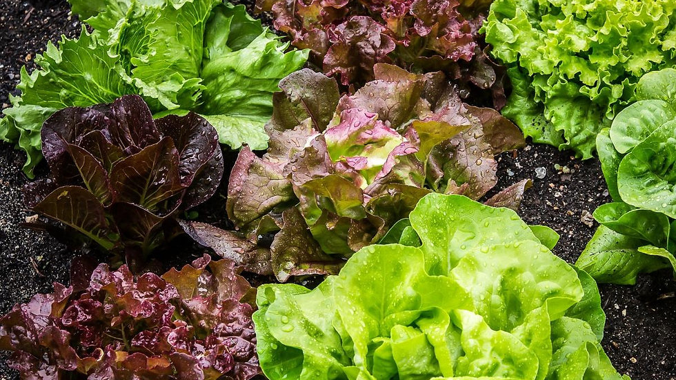 Lettuce Bowl- Mixed