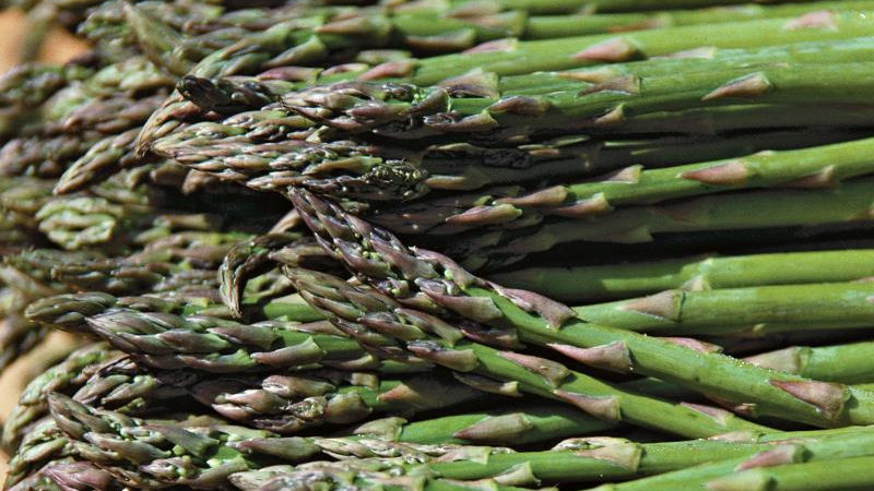 Asparagus- Jersey Knight
