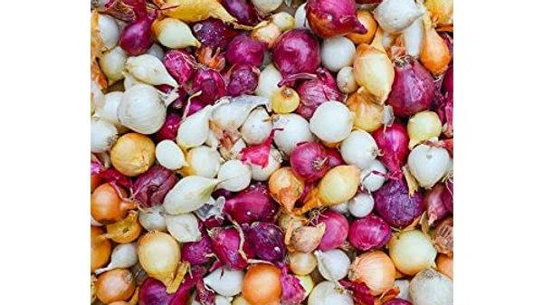 Onion Sets- Mixed
