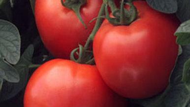 Tomato- Early Girl Bush