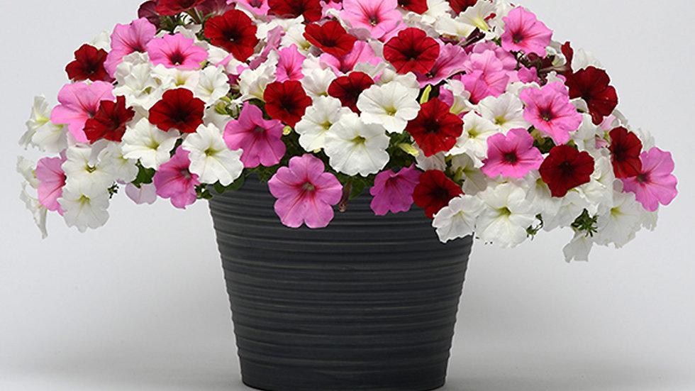 Combo Petunia - Easy Wave Very Valentine