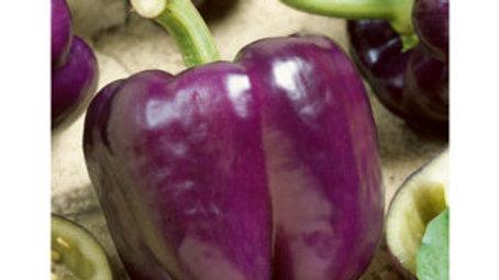 Pepper- Purple Beauty