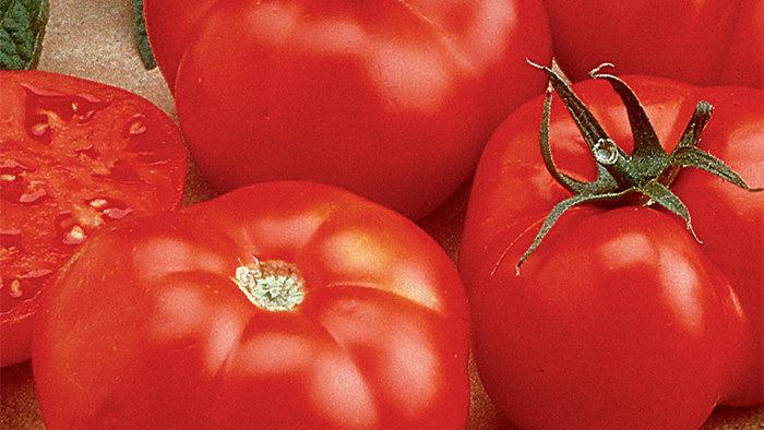 Tomato- Beefmaster