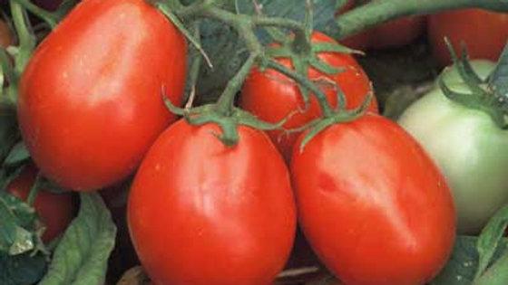 Tomato- Fresh Salsa