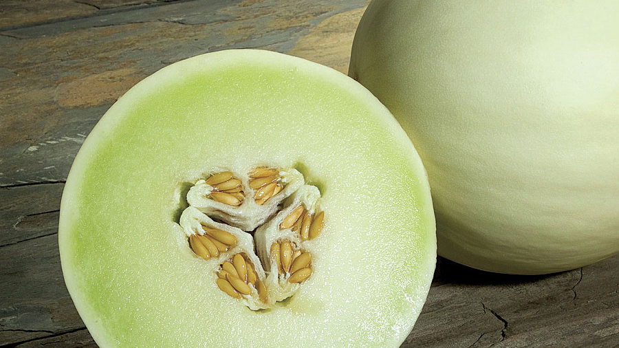 Melon- Honeydew Snow Mass