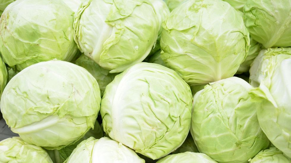 Cabbage- Fast Vantage