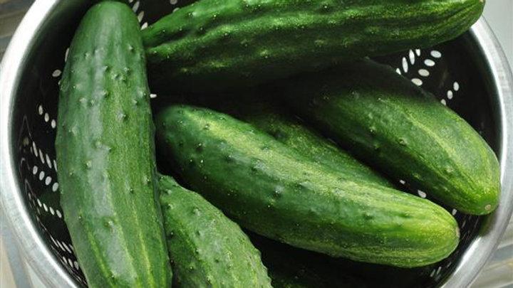 Cucumber- Patio Snacker