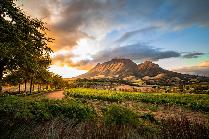 Winelands.jpg
