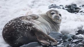 DECEMBER'S WINNER: The Seal