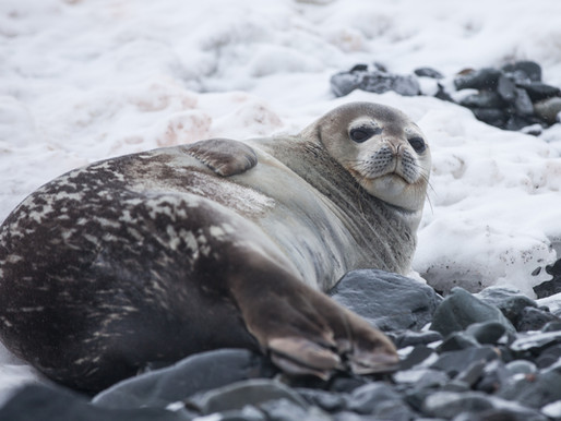 Should We Get Rid of Seals?