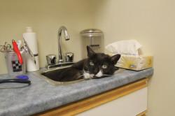 Collins Bay Animal Hospital Kingston