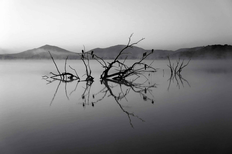 호수에 나무