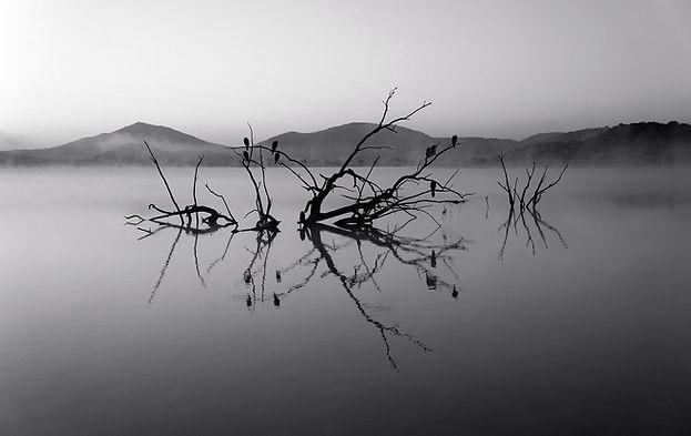 Árboles en el lago