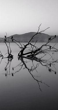 Träd i Lake