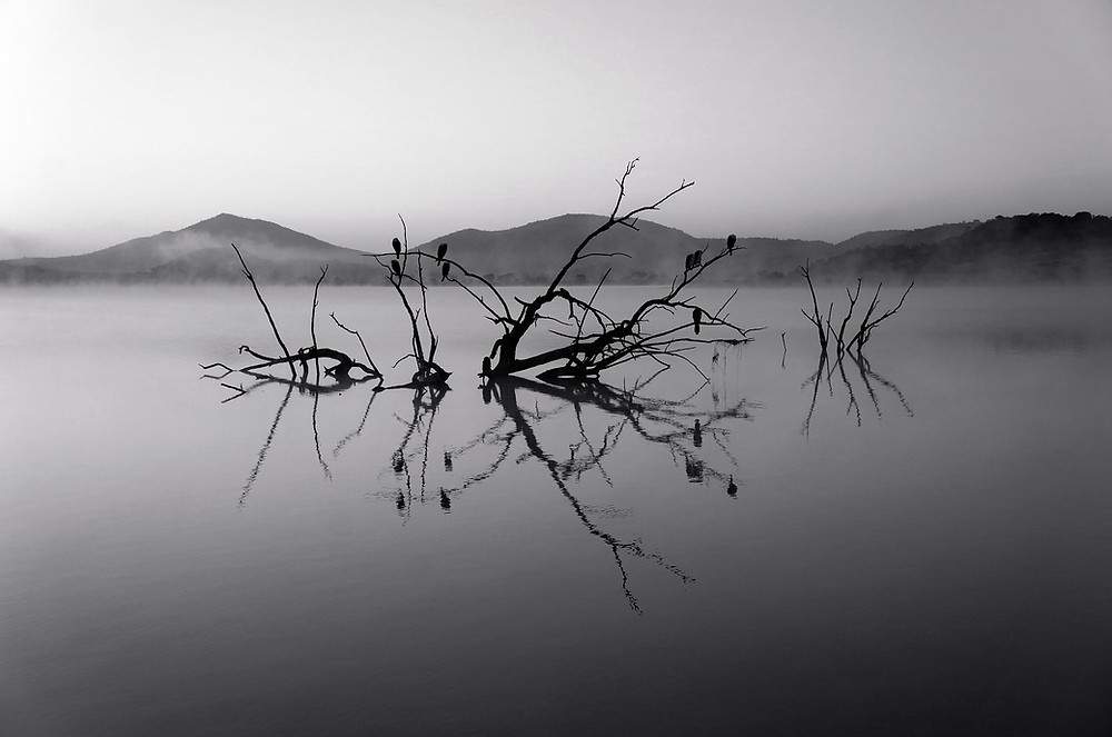 tree branches reflected in the water